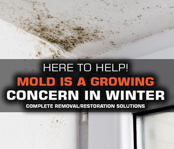 Why SERVPRO Mold is a GROWING ISSUE for Middlesex & Monmouth County home and business owners in New Jersey DURING WINTER.